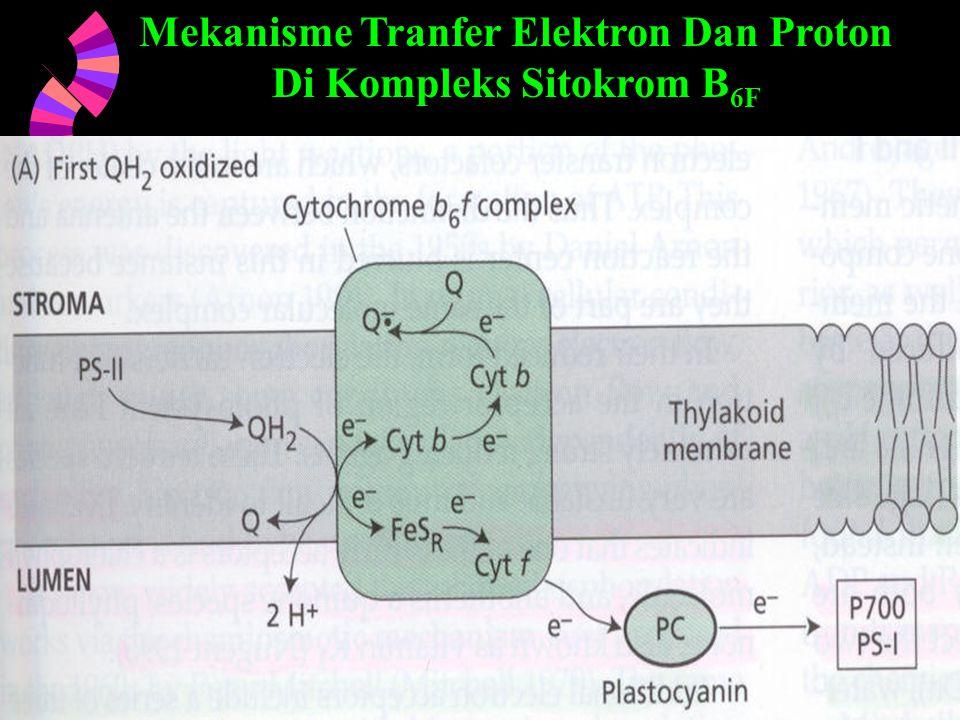 4/25/201549 Mekanisme Tranfer Elektron Dan Proton Di Kompleks Sitokrom B 6F