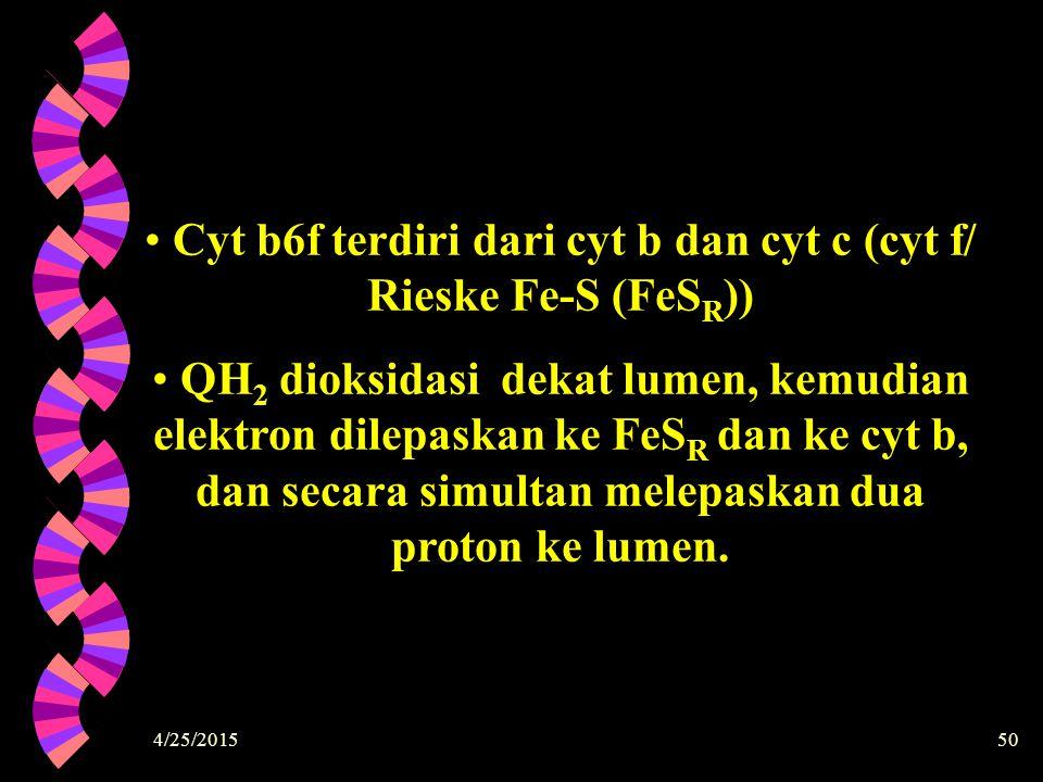 4/25/201550 Cyt b6f terdiri dari cyt b dan cyt c (cyt f/ Rieske Fe-S (FeS R )) QH 2 dioksidasi dekat lumen, kemudian elektron dilepaskan ke FeS R dan