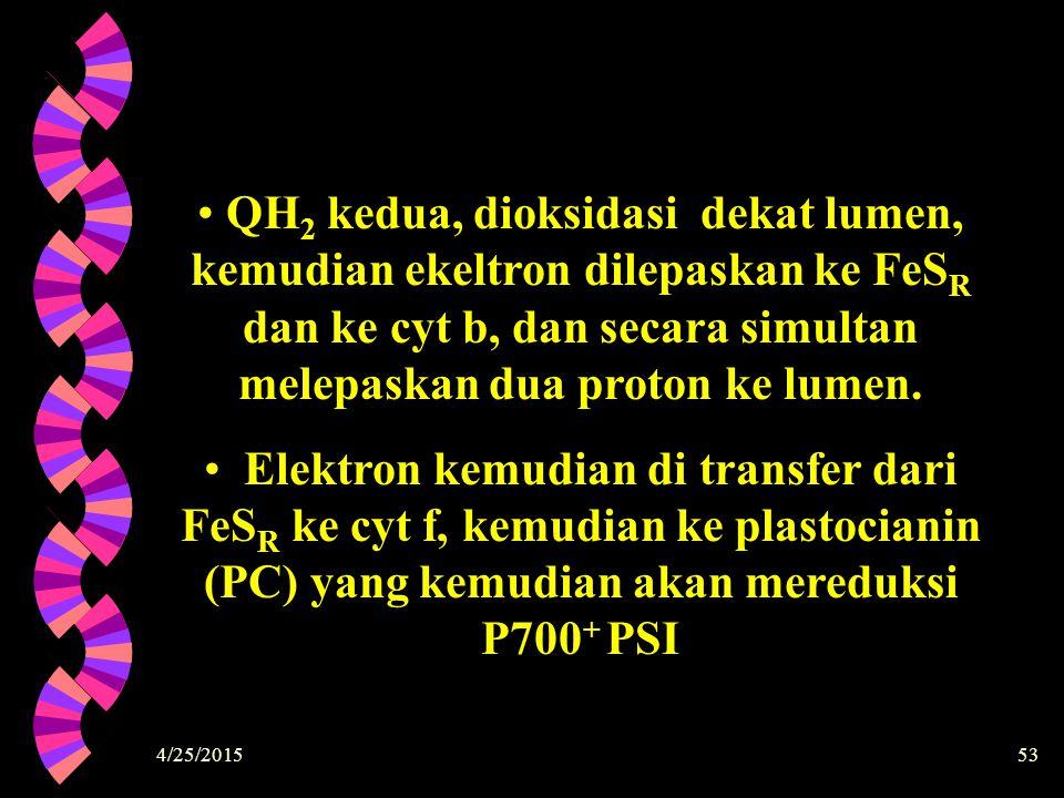 4/25/201553 QH 2 kedua, dioksidasi dekat lumen, kemudian ekeltron dilepaskan ke FeS R dan ke cyt b, dan secara simultan melepaskan dua proton ke lumen