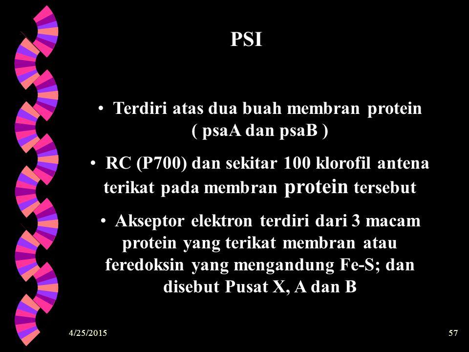 4/25/201557 Terdiri atas dua buah membran protein ( psaA dan psaB ) RC (P700) dan sekitar 100 klorofil antena terikat pada membran protein tersebut Ak
