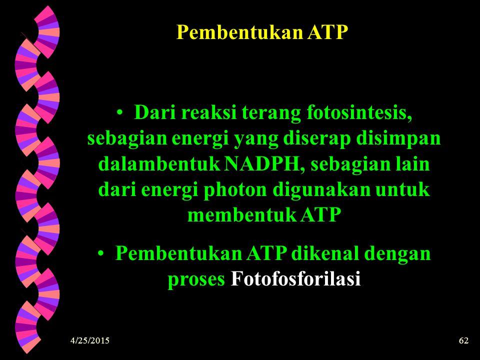 4/25/201562 Pembentukan ATP Dari reaksi terang fotosintesis, sebagian energi yang diserap disimpan dalambentuk NADPH, sebagian lain dari energi photon