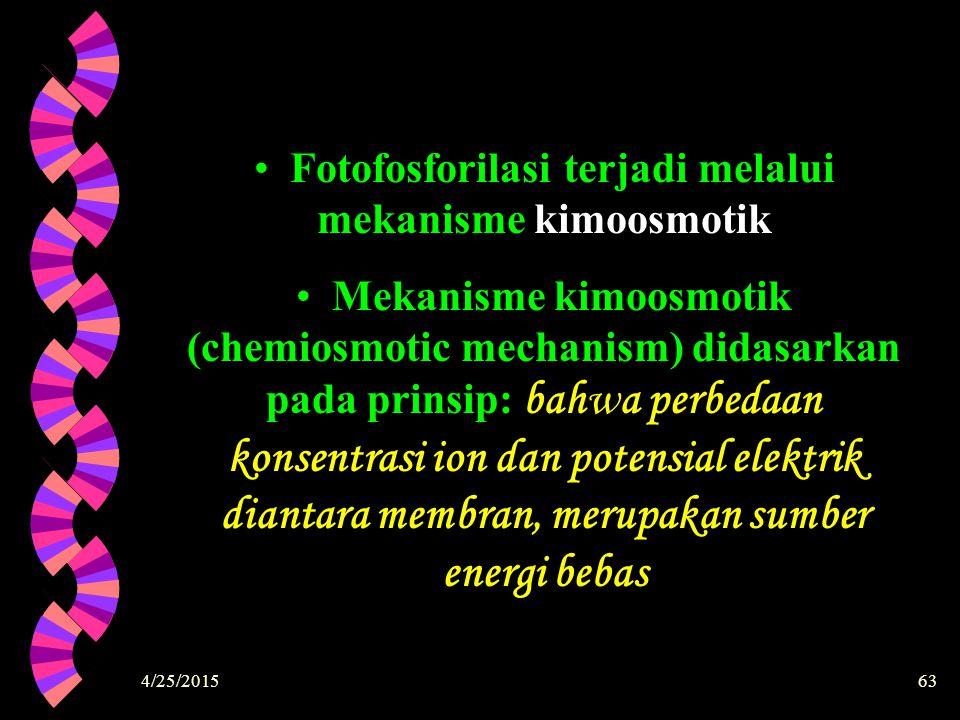 4/25/201563 Fotofosforilasi terjadi melalui mekanisme kimoosmotik Mekanisme kimoosmotik (chemiosmotic mechanism) didasarkan pada prinsip: bahwa perbed