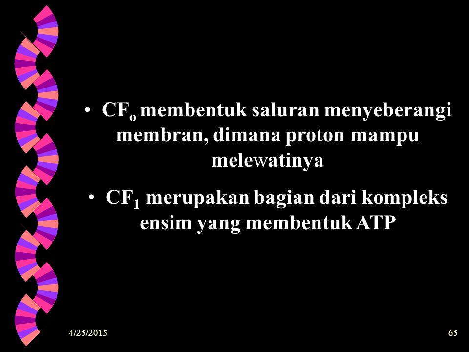 4/25/201565 CF o membentuk saluran menyeberangi membran, dimana proton mampu melewatinya CF 1 merupakan bagian dari kompleks ensim yang membentuk ATP