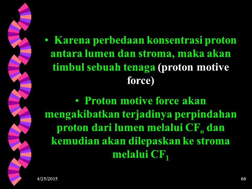 4/25/201566 Karena perbedaan konsentrasi proton antara lumen dan stroma, maka akan timbul sebuah tenaga (proton motive force) Proton motive force akan