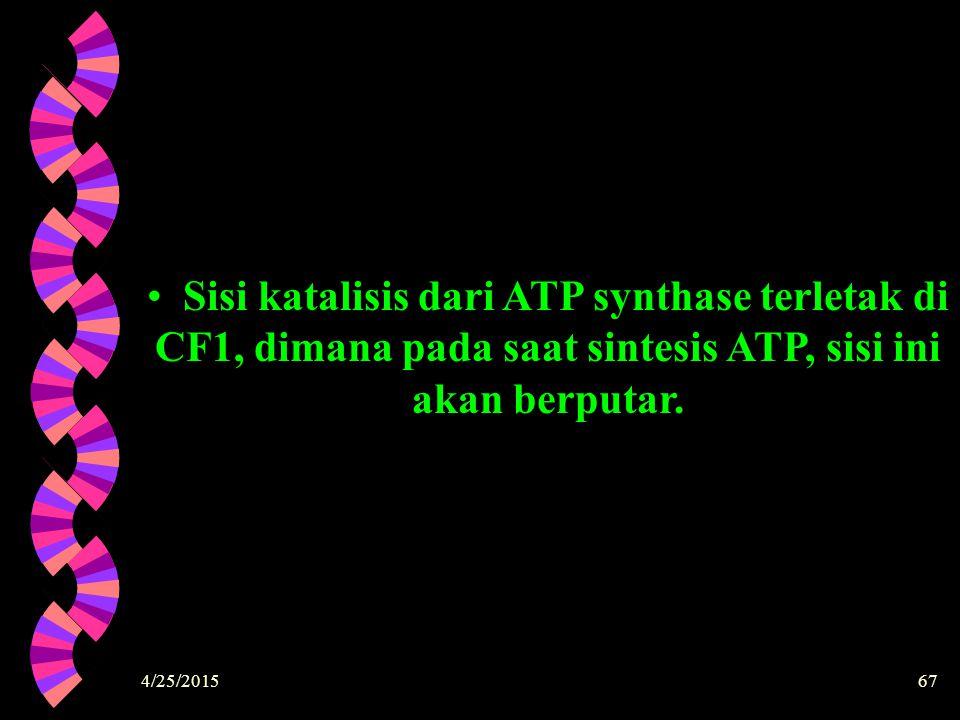 4/25/201567 Sisi katalisis dari ATP synthase terletak di CF1, dimana pada saat sintesis ATP, sisi ini akan berputar.