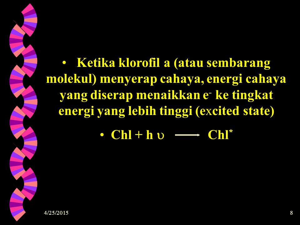 4/25/20158 Ketika klorofil a (atau sembarang molekul) menyerap cahaya, energi cahaya yang diserap menaikkan e - ke tingkat energi yang lebih tinggi (e