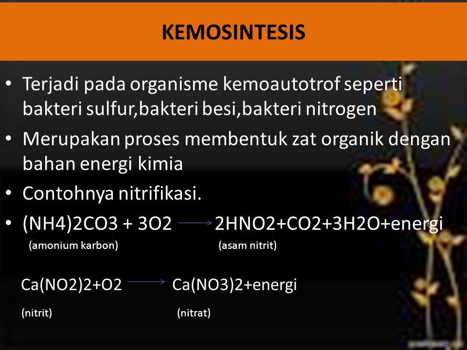 Terjadi pada organisme kemoautotrof seperti bakteri sulfur,bakteri besi,bakteri nitrogen Merupakan proses membentuk zat organik dengan bahan energi ki