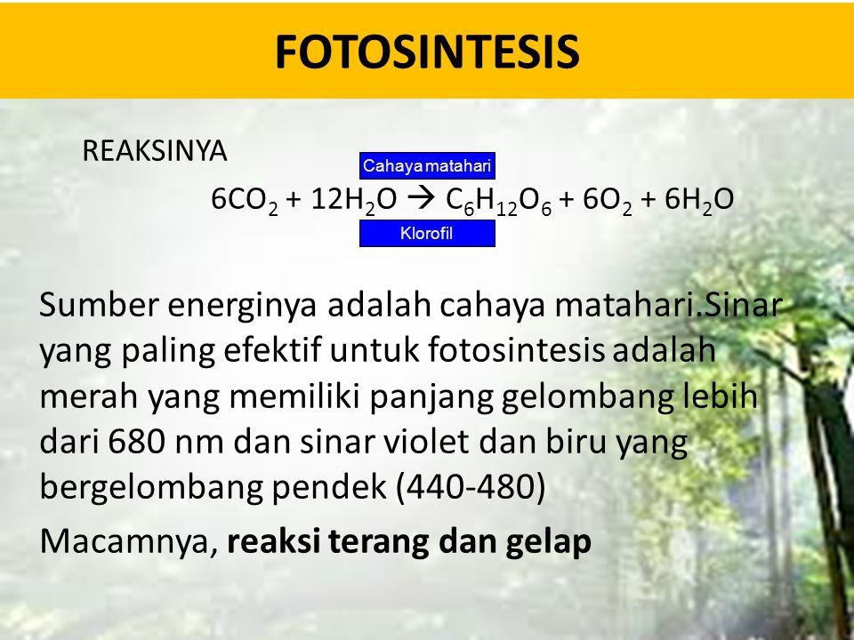 FOTOSINTESIS REAKSINYA 6CO 2 + 12H 2 O  C 6 H 12 O 6 + 6O 2 + 6H 2 O Sumber energinya adalah cahaya matahari.Sinar yang paling efektif untuk fotosint