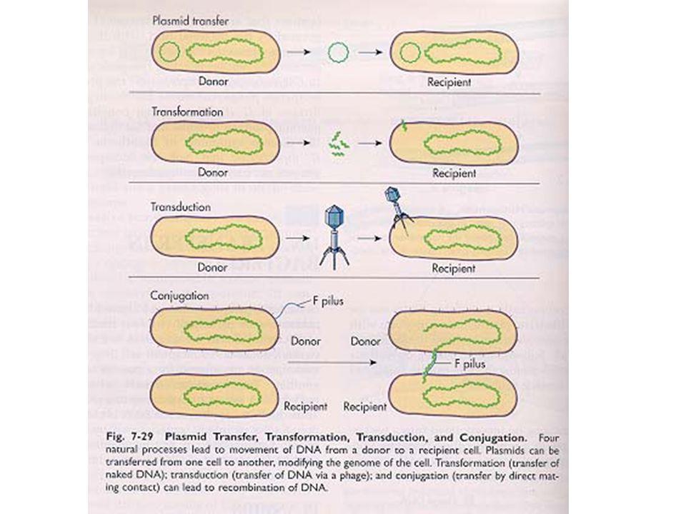 Plasmid R menyebar dengan mudah dari satu bakteri ke bakteri yang lain melalui proses konjugasi Perolehan dan transmisi kemampuan resistensi antibioti
