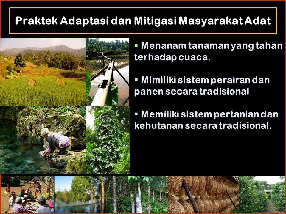 Praktek Adaptasi dan Mitigasi Masyarakat Adat  Menanam tanaman yang tahan terhadap cuaca.