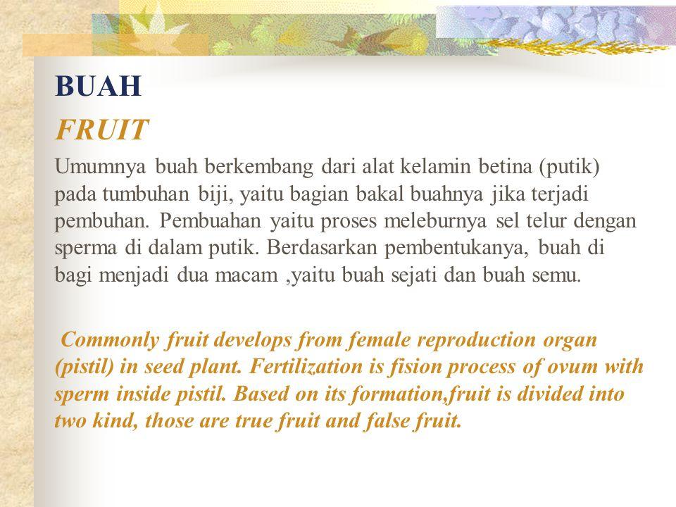 BUAH FRUIT Umumnya buah berkembang dari alat kelamin betina (putik) pada tumbuhan biji, yaitu bagian bakal buahnya jika terjadi pembuhan. Pembuahan ya
