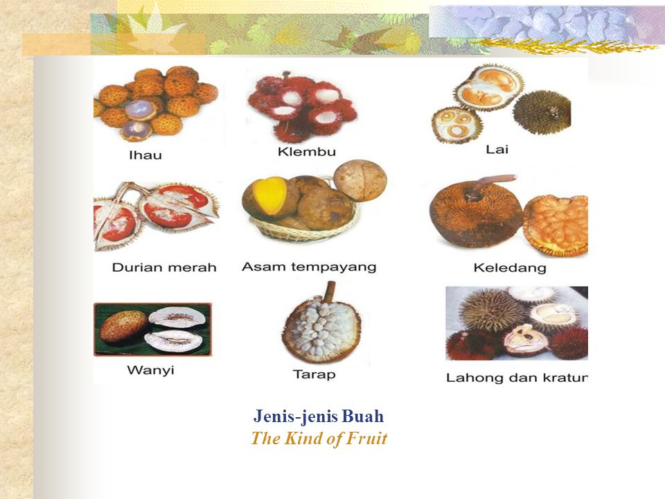 Jenis-Jenis Buah The Kinds of Fruit Berdasarkan pembentukanya, buah di bagi menjadi dua macam, yaitu buah sejati dan buah semu.