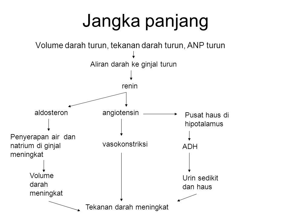 Jangka panjang Volume darah turun, tekanan darah turun, ANP turun Aliran darah ke ginjal turun renin aldosteron Penyerapan air dan natrium di ginjal m