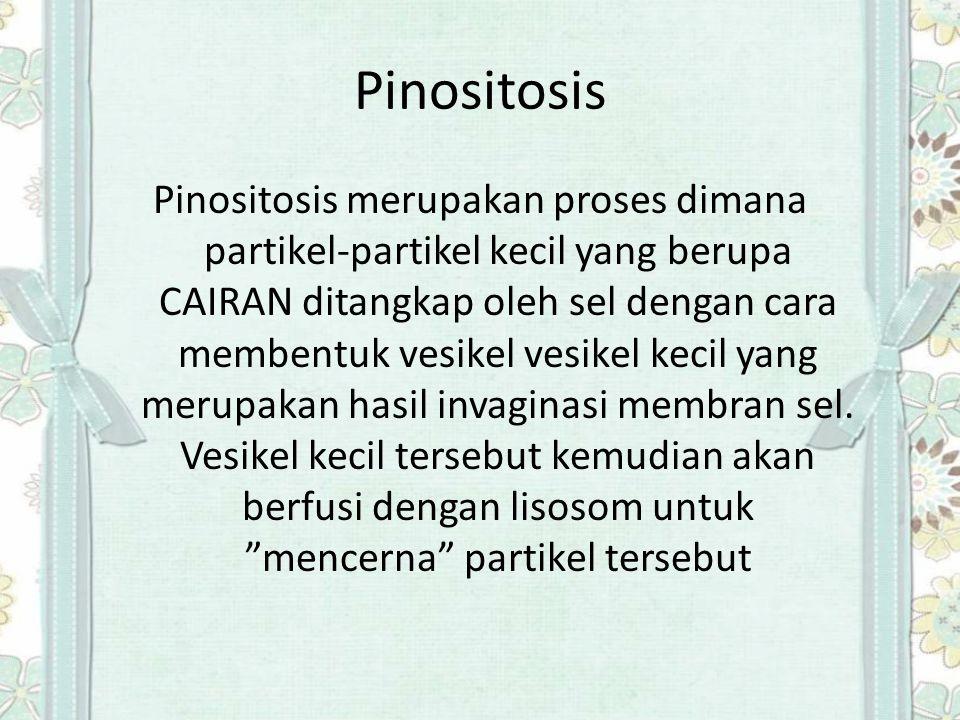 Pinositosis Pinositosis merupakan proses dimana partikel-partikel kecil yang berupa CAIRAN ditangkap oleh sel dengan cara membentuk vesikel vesikel ke