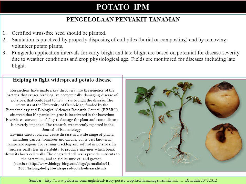 PENGELOLAAN PENYAKIT TANAMAN 1.Certified virus-free seed should be planted. 2.Sanitation is practiced by properly disposing of cull piles (burial or c