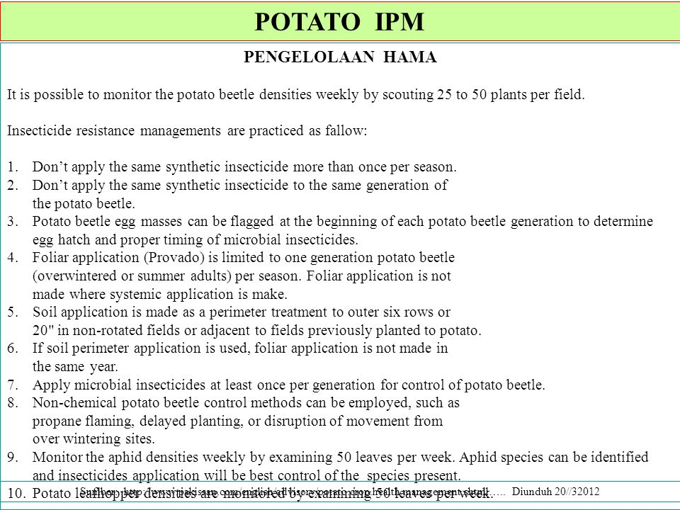 PENGELOLAAN HAMA It is possible to monitor the potato beetle densities weekly by scouting 25 to 50 plants per field.
