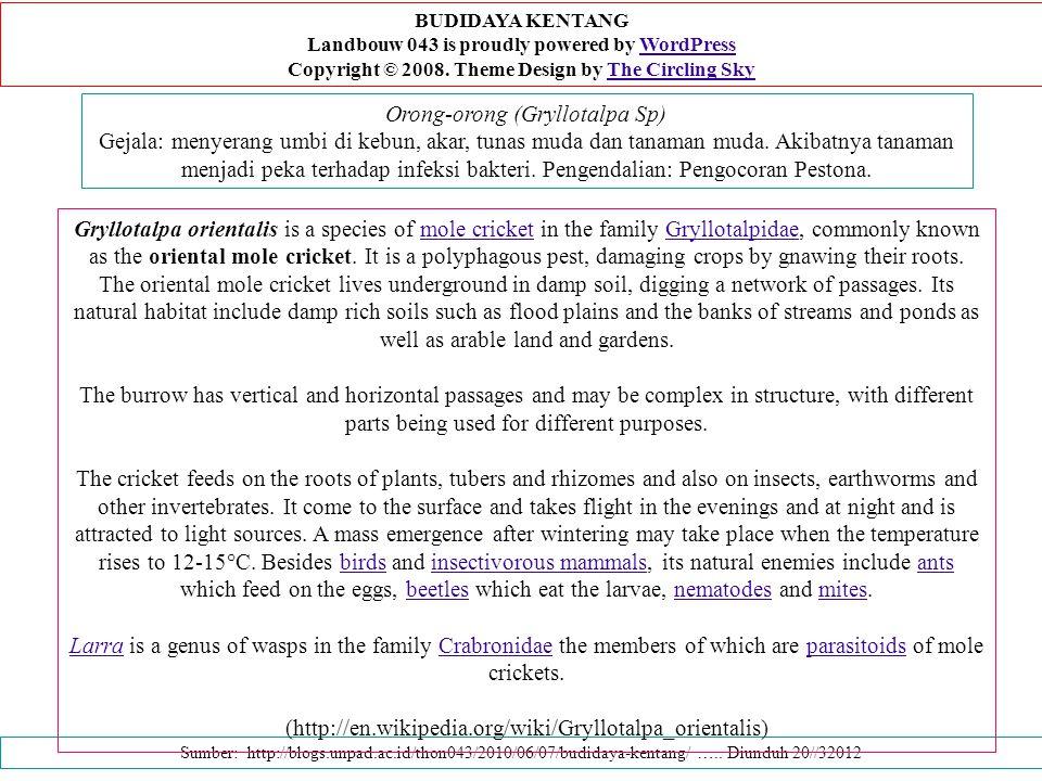 Orong-orong (Gryllotalpa Sp) Gejala: menyerang umbi di kebun, akar, tunas muda dan tanaman muda.