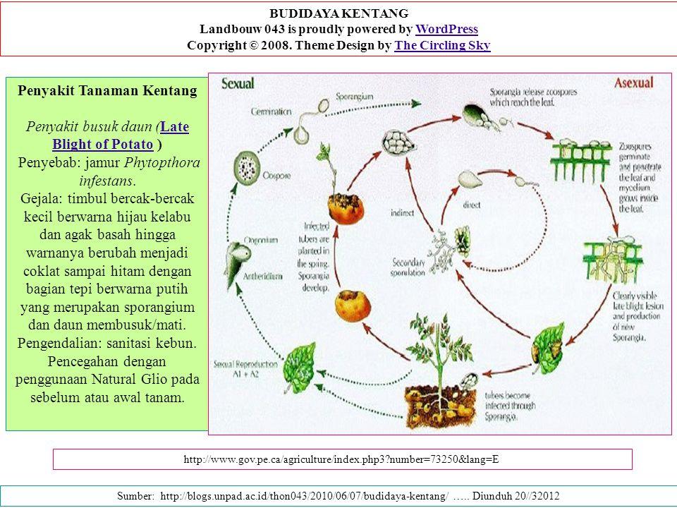 Penyakit Tanaman Kentang Penyakit busuk daun (Late Blight of Potato ) Penyebab: jamur Phytopthora infestans.Late Blight of Potato Gejala: timbul berca
