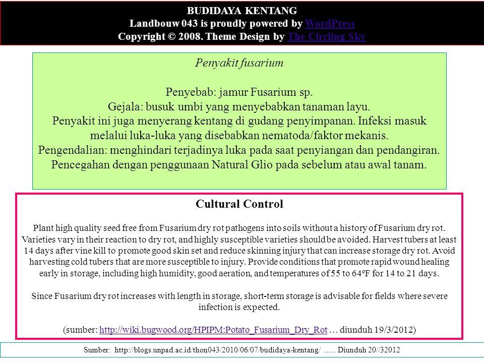 Penyakit fusarium Penyebab: jamur Fusarium sp. Gejala: busuk umbi yang menyebabkan tanaman layu. Penyakit ini juga menyerang kentang di gudang penyimp
