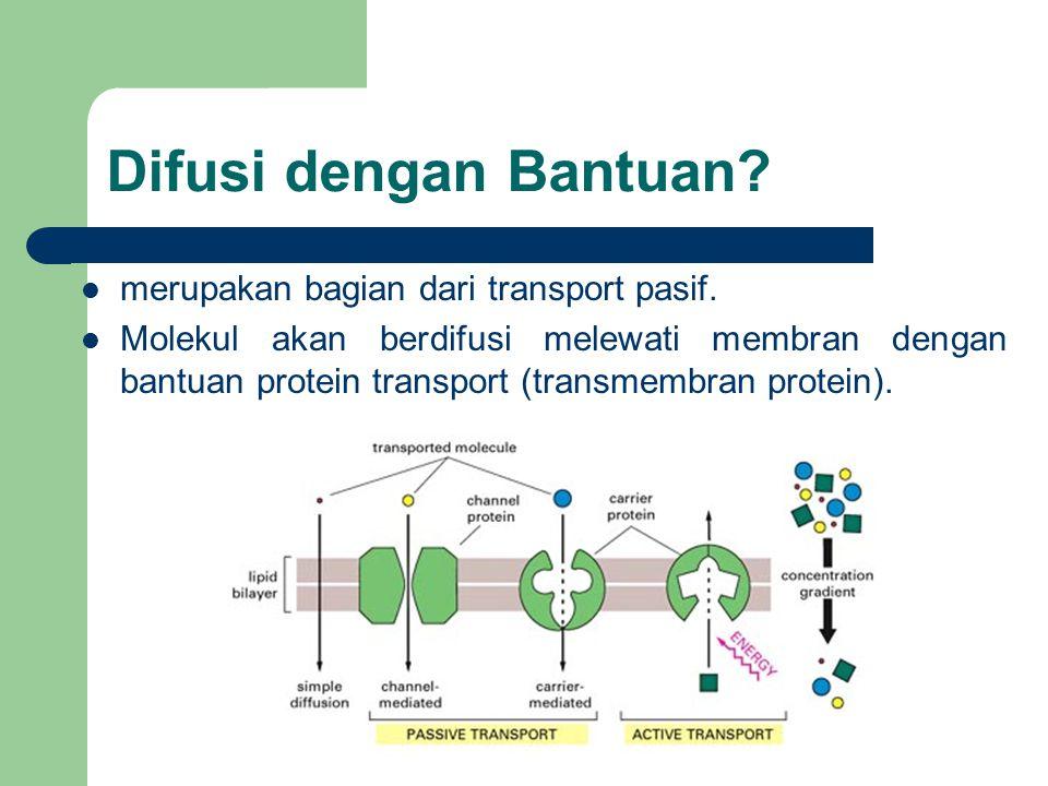 Difusi dengan Bantuan? merupakan bagian dari transport pasif. Molekul akan berdifusi melewati membran dengan bantuan protein transport (transmembran p