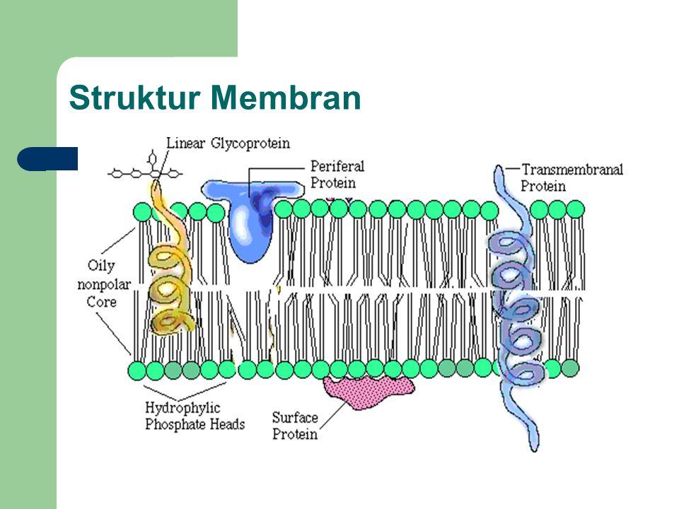 Mengapa dibutuhkan bantuan protein transport.