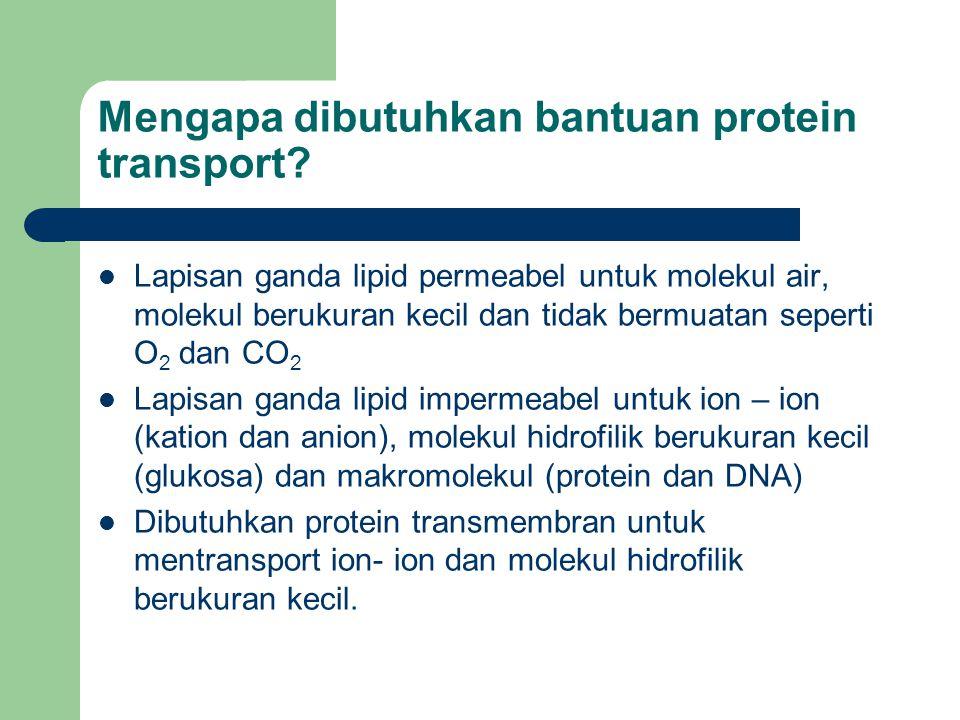 Mengapa dibutuhkan bantuan protein transport? Lapisan ganda lipid permeabel untuk molekul air, molekul berukuran kecil dan tidak bermuatan seperti O 2