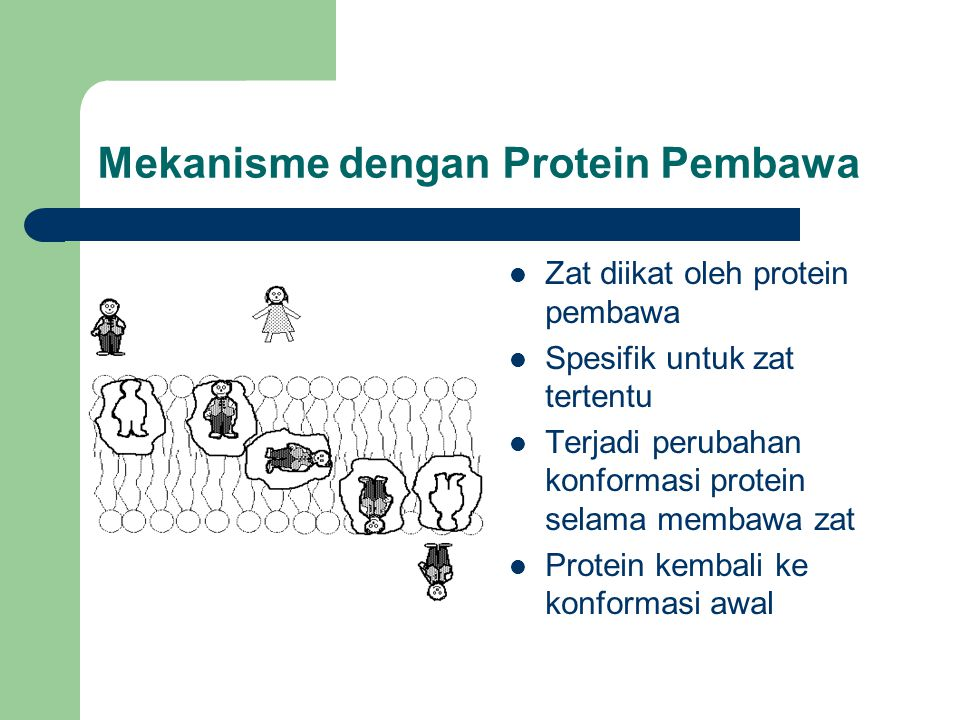 Mekanisme dengan Protein Pembawa Zat diikat oleh protein pembawa Spesifik untuk zat tertentu Terjadi perubahan konformasi protein selama membawa zat P