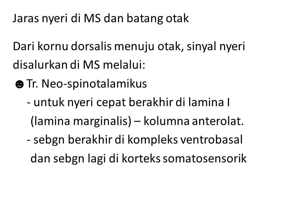 Jaras nyeri di MS dan batang otak Dari kornu dorsalis menuju otak, sinyal nyeri disalurkan di MS melalui: ☻ Tr. Neo-spinotalamikus - untuk nyeri cepat