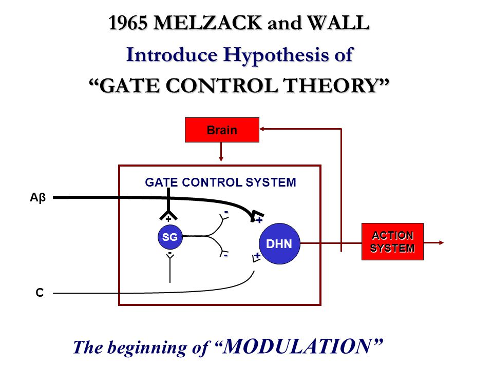 "DHN GATE CONTROL SYSTEM + + ACTIONSYSTEM Brain SG + - - - AβAβ C 1965 MELZACK and WALL Introduce Hypothesis of ""GATE CONTROL THEORY"" The beginning of"