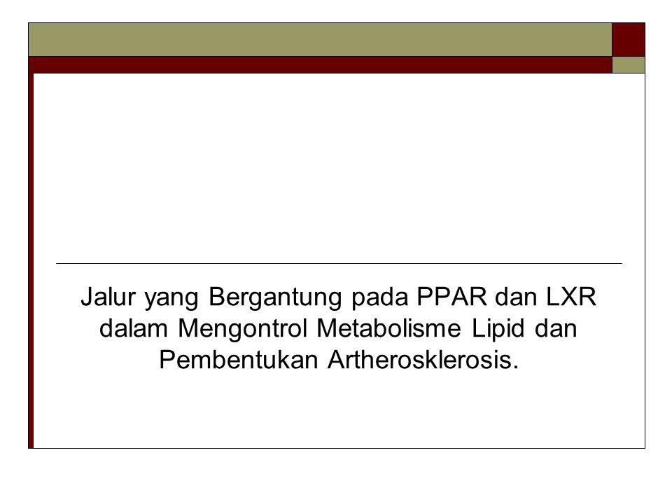Jalur yang Bergantung pada PPAR dan LXR dalam Mengontrol Metabolisme Lipid dan Pembentukan Artherosklerosis.