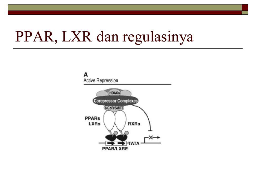 PPAR, LXR dan regulasinya
