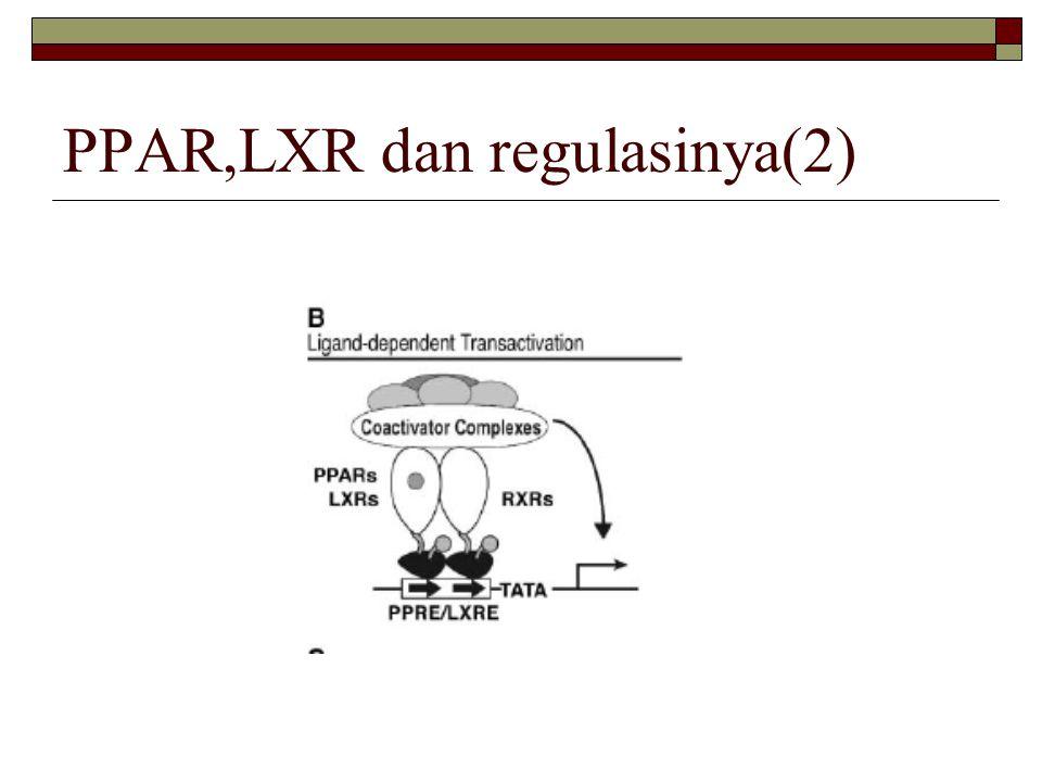 PPAR,LXR dan regulasinya(2)