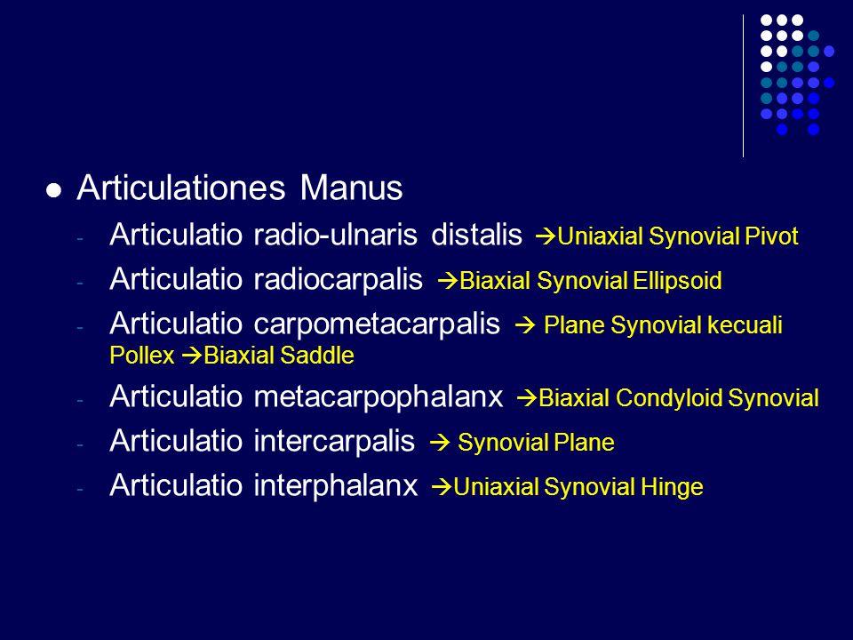 Articulationes Manus - Articulatio radio-ulnaris distalis  Uniaxial Synovial Pivot - Articulatio radiocarpalis  Biaxial Synovial Ellipsoid - Articul