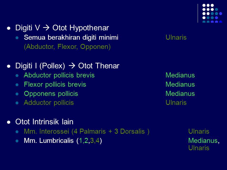 Digiti V  Otot Hypothenar Semua berakhiran digiti minimi Ulnaris (Abductor, Flexor, Opponen) Digiti I (Pollex)  Otot Thenar Abductor pollicis brevis
