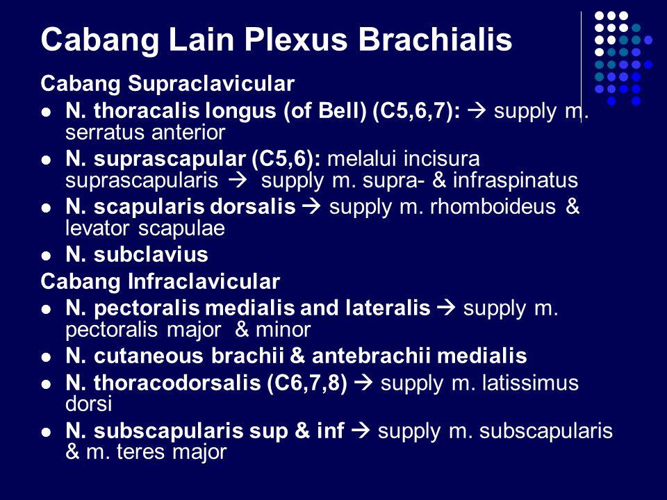 Cabang Lain Plexus Brachialis Cabang Supraclavicular N. thoracalis longus (of Bell) (C5,6,7):  supply m. serratus anterior N. suprascapular (C5,6): m