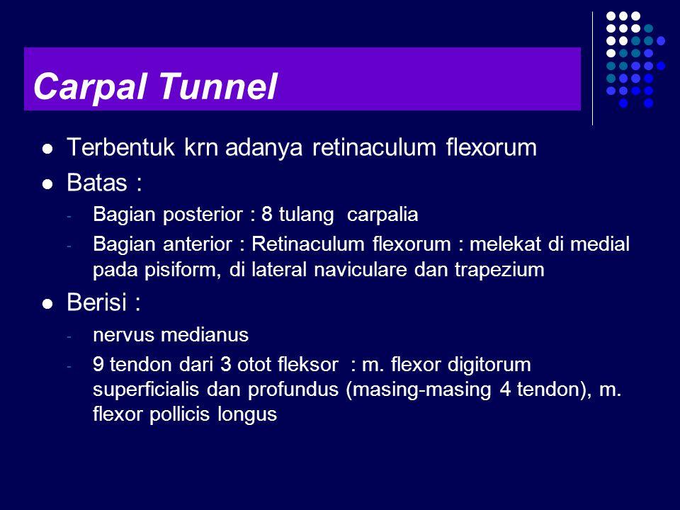 Terbentuk krn adanya retinaculum flexorum Batas : - Bagian posterior : 8 tulang carpalia - Bagian anterior : Retinaculum flexorum : melekat di medial