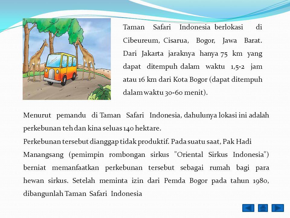Menurut pemandu di Taman Safari Indonesia, dahulunya lokasi ini adalah perkebunan teh dan kina seluas 140 hektare.