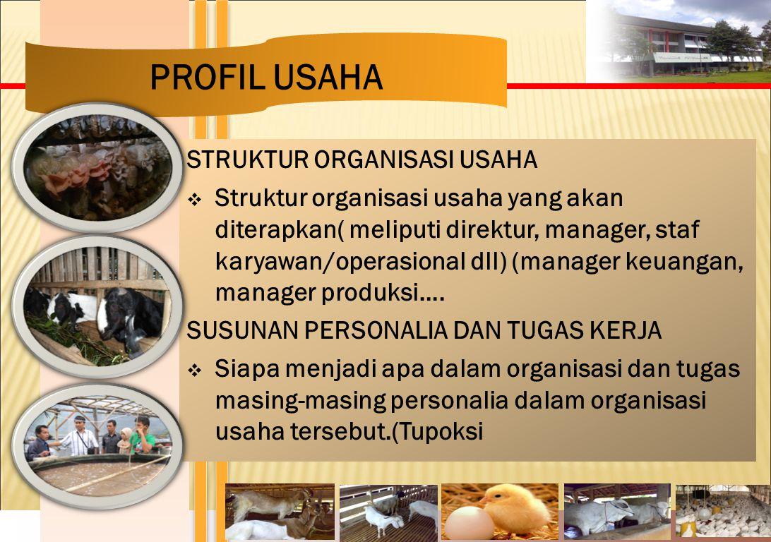 STRUKTUR ORGANISASI USAHA  Struktur organisasi usaha yang akan diterapkan( meliputi direktur, manager, staf karyawan/operasional dll) (manager keuang