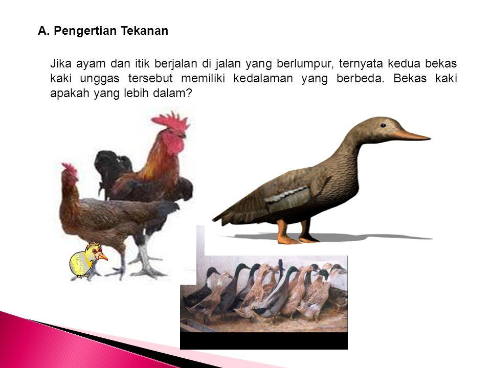 A. Pengertian Tekanan Jika ayam dan itik berjalan di jalan yang berlumpur, ternyata kedua bekas kaki unggas tersebut memiliki kedalaman yang berbeda.