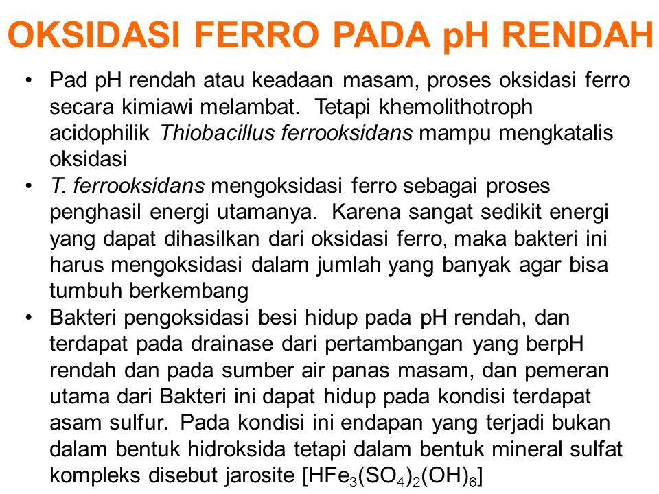 OKSIDASI FERRO PADA pH RENDAH Pad pH rendah atau keadaan masam, proses oksidasi ferro secara kimiawi melambat. Tetapi khemolithotroph acidophilik Thio