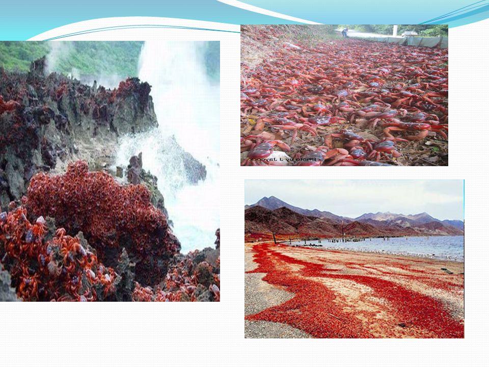Pendapatan ekonomi Kegiatan ekonomi utama di pulau ini adalah penambangan fosfat.