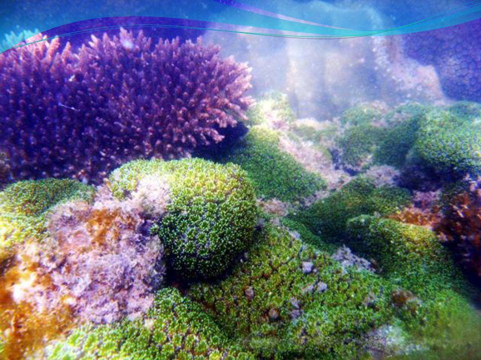 Daerah dangkal dikelilingi lautan, sering merupakan daerah berkumpulnya ikan-ikan laut.