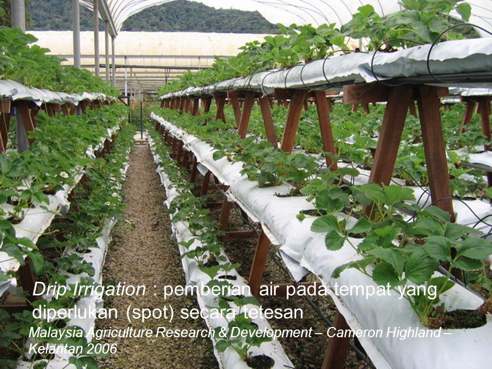 Drip Irrigation : pemberian air pada tempat yang diperlukan (spot) secara tetesan Malaysia Agriculture Research & Development – Cameron Highland – Kel