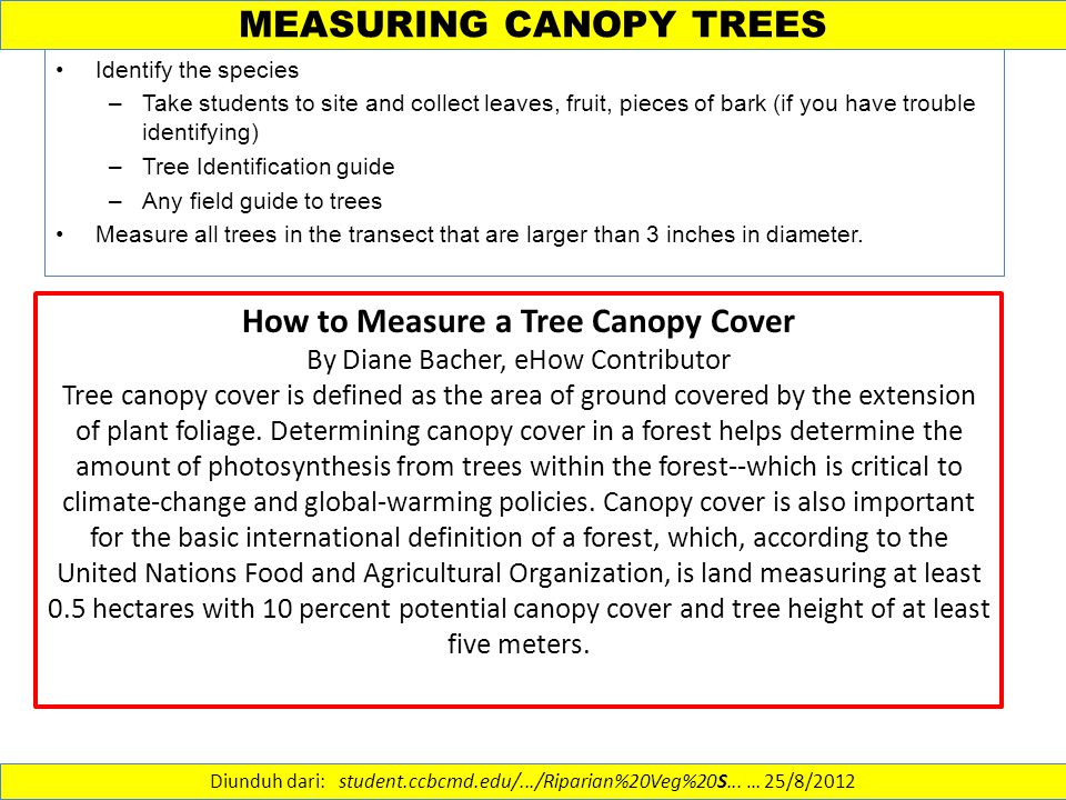 MEASURING CANOPY TREES Identify the species –Take students to site and collect leaves, fruit, pieces of bark (if you have trouble identifying) –Tree I