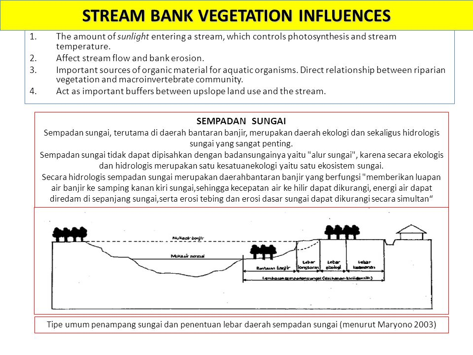 STREAM BANK VEGETATION INFLUENCES 1.The amount of sunlight entering a stream, which controls photosynthesis and stream temperature. 2.Affect stream fl