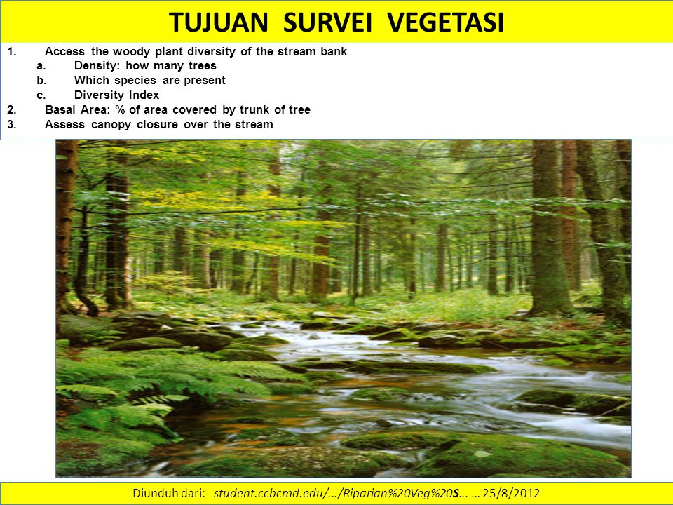 TUJUAN SURVEI VEGETASI 1.Access the woody plant diversity of the stream bank a.Density: how many trees b.Which species are present c.Diversity Index 2