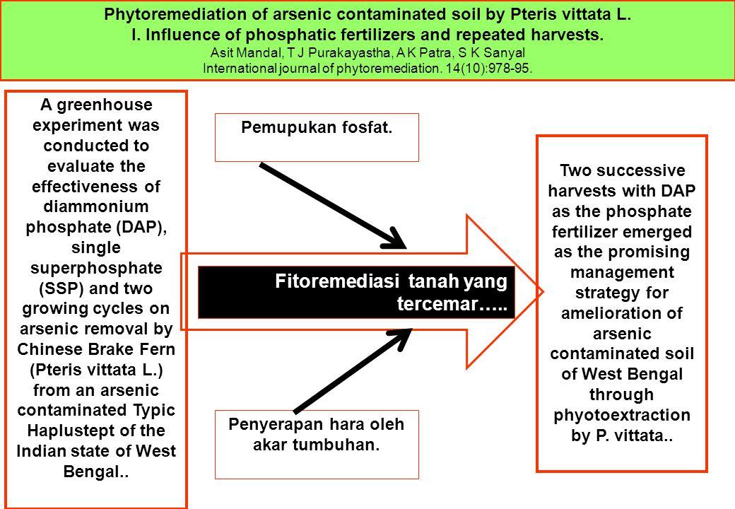 Pemupukan fosfat. Penyerapan hara oleh akar tumbuhan. Fitoremediasi tanah yang tercemar….. Phytoremediation of arsenic contaminated soil by Pteris vit