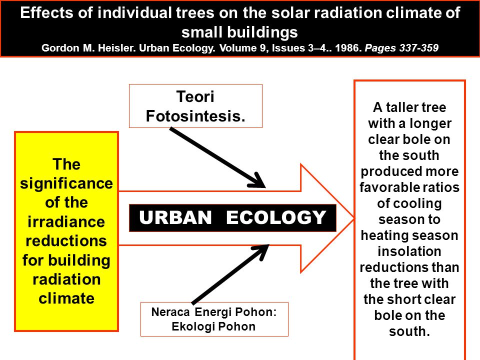The significance of the irradiance reductions for building radiation climate A taller tree with a longer clear bole on the south produced more favorab