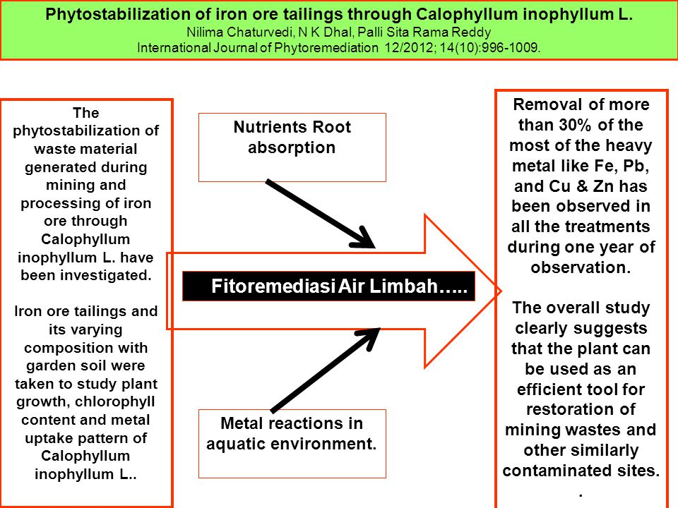Nutrients Root absorption Metal reactions in aquatic environment. Fitoremediasi Air Limbah….. Phytostabilization of iron ore tailings through Calophyl