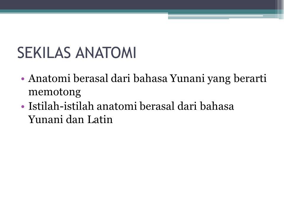 SEKILAS ANATOMI Anatomi berasal dari bahasa Yunani yang berarti memotong Istilah-istilah anatomi berasal dari bahasa Yunani dan Latin